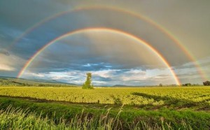 Double Rainbow_Wheeler
